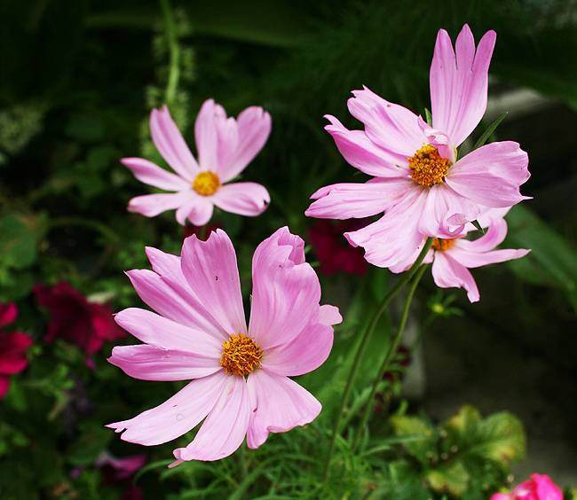 5 Easy Flowers to Start from Seed in Your Garden